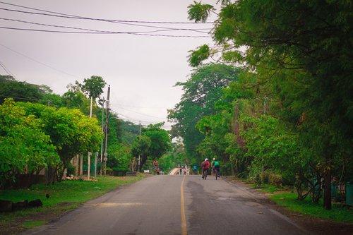 nature  urban  asphalt