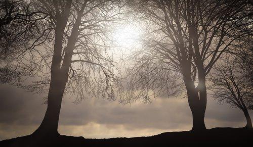 nature  trees  sky