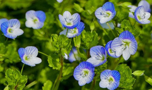 nature  forest  flowers