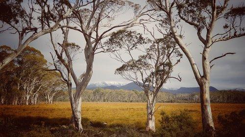 nature  landscape  australia