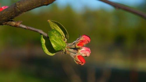 nature  plants  sprig