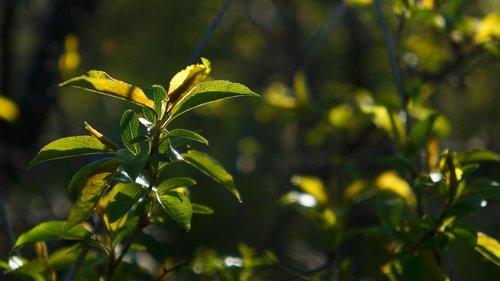 nature  plants  twigs