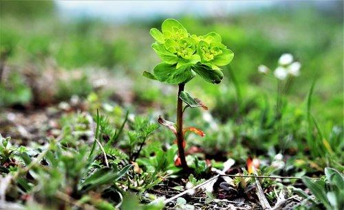 nature  green  natural