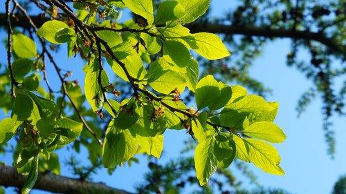 nature  plants  green