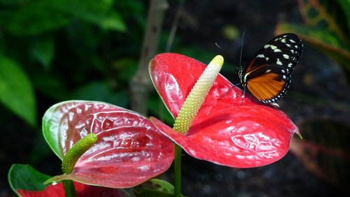 nature  flower  butterfly