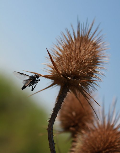 nature  fly  animal