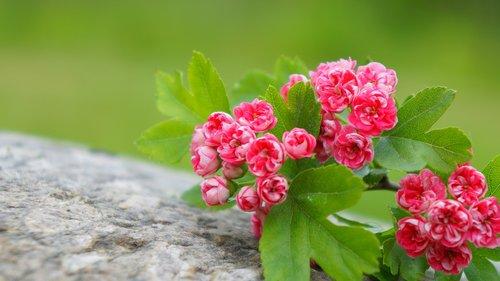 nature  plants  pink