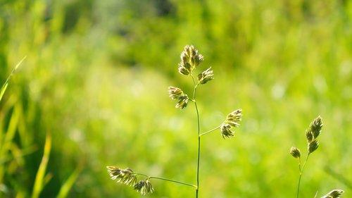 nature  plants  grass
