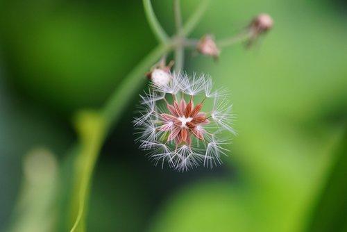 nature  hall seed  wild