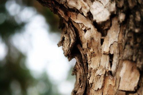 nature  leaves  tree