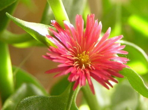 nature thermophilic plants půdokryvné