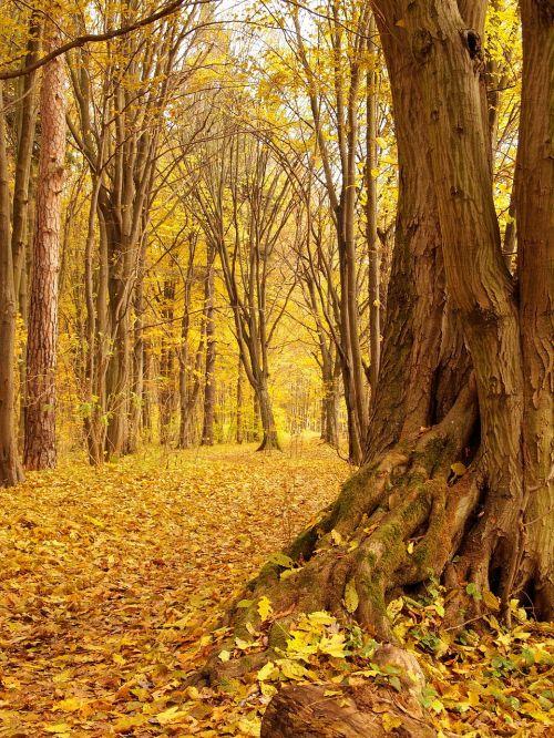 nature landscape autumn
