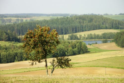 nature landscape tree