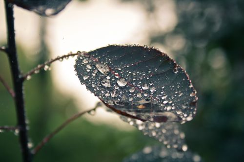 nature raindrop leaf