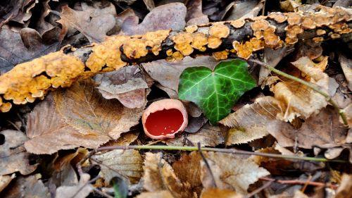 nature spring mushroom