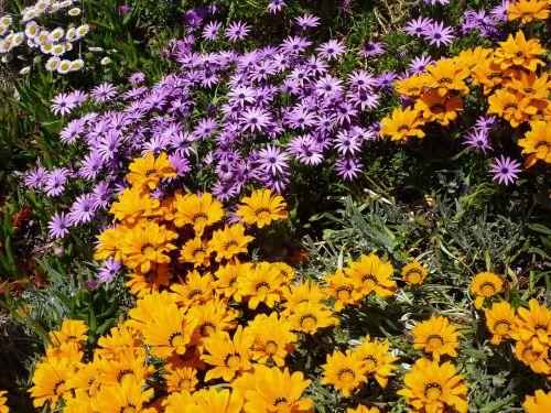 nature flowers yellow