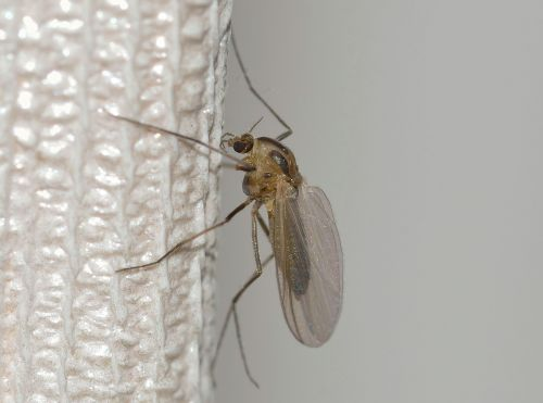 nature insects mosquito