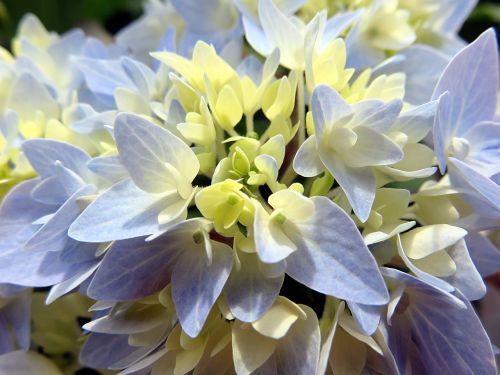 nature plant flower