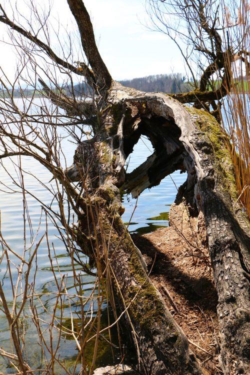 nature tree split