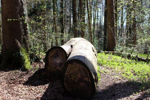 nature tree trunks like
