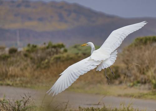 nature animal bird