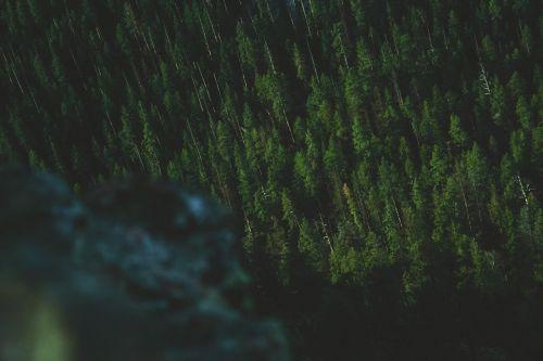 nature plants trees