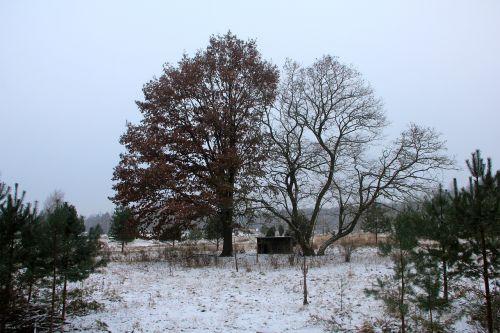 nature winter grunewald