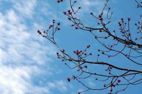 nature spring tree