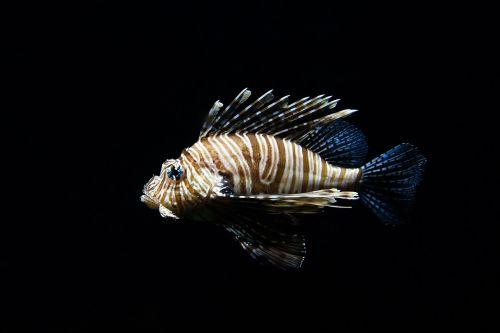 nature animal fish