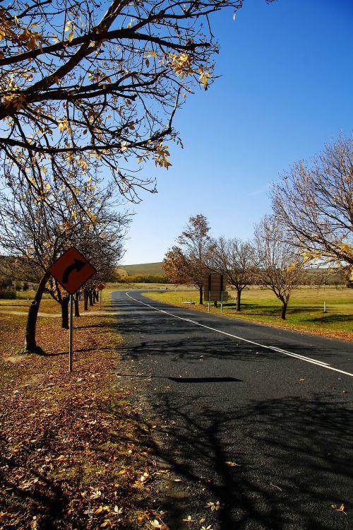 nature autumn road