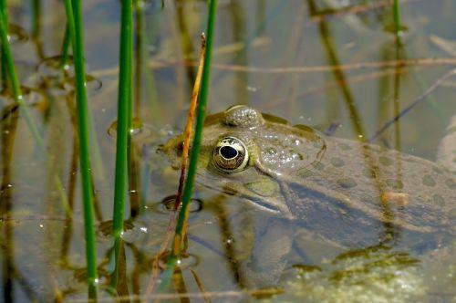 nature animals amphibians