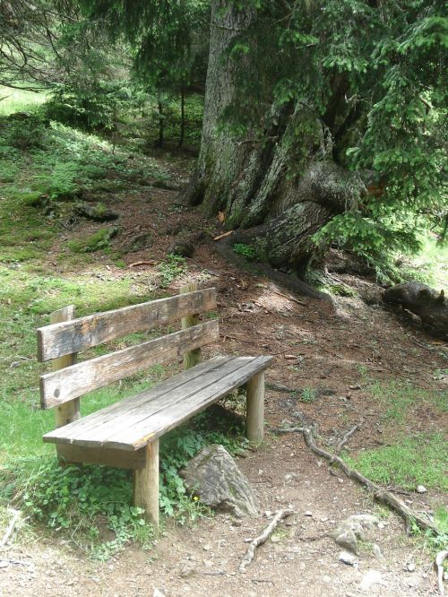nature bank wooden bench