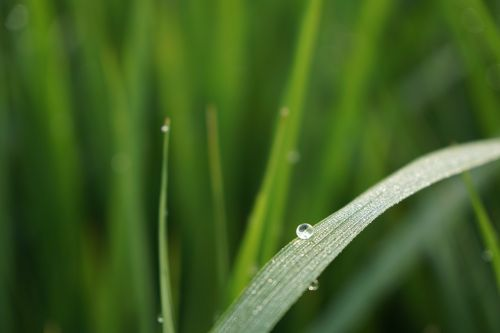 nature dew green