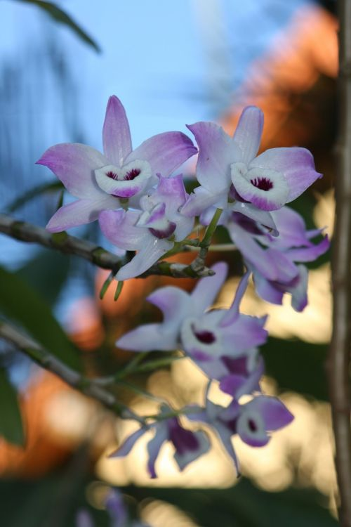 orchids nature fantastic colored