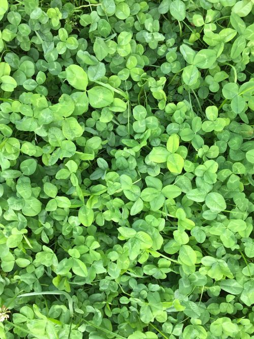nature green luck