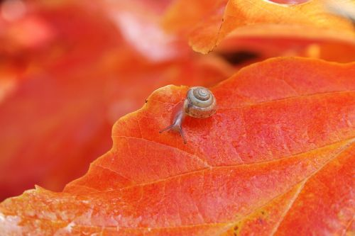 nature animal snail