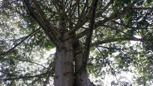 gamta,medis,bagažinė