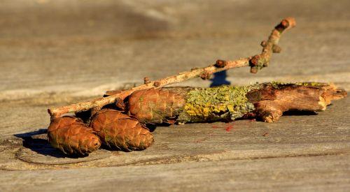 nature fund abgewittert lerch tap