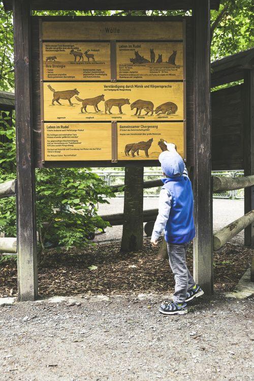 gamtos parkas,laukinio gyvenimo parkas,gamta,gyvūnas,laukinis gyvūnas,zoologijos sodas,miškas,kailis,parkas,žinduolis,padaras,Veldensteiner forst,viršutinė frankonija,miškininkystė,lenta,informacija,vaikas,skaityti,mokytis,atpažinti,smalsumas