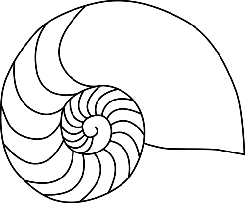 nautilus animal biology
