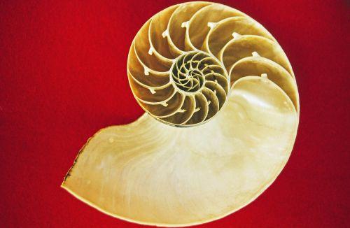 nautilus cephalopods sea