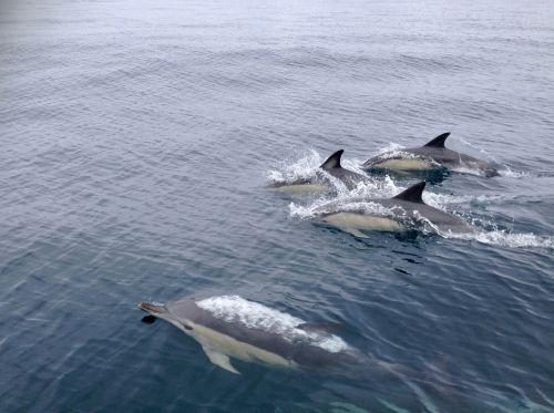 navigation dolphins jump
