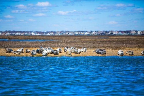 navy seals  seals  ocean