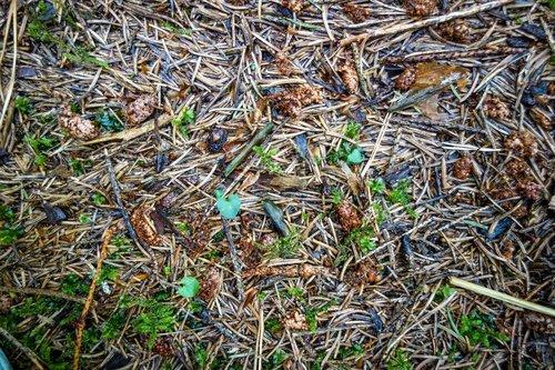needle floor  needles  pine needles