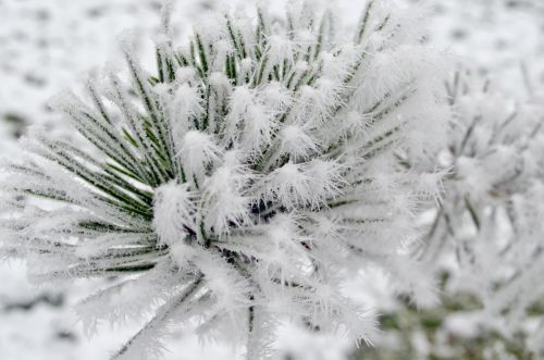 Needles And Frost 2