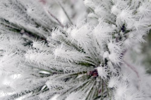 Needles And Frost