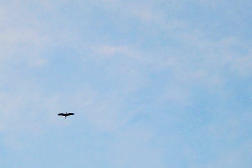 negative space bird fly crane
