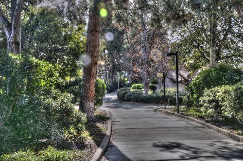 Neighborhood Walking Path
