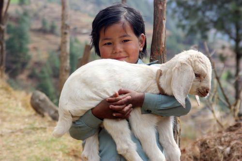 nepal lamb sherpa