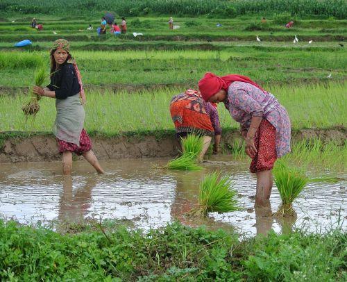 nepal nepalese women